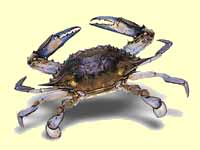The crab is the animal associated with cancer